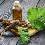 Tác dụng Rễ ngưu bàng là gì?