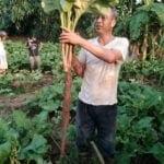 Bán ngưu bàng, nấm đông cô tại Bắc Ninh